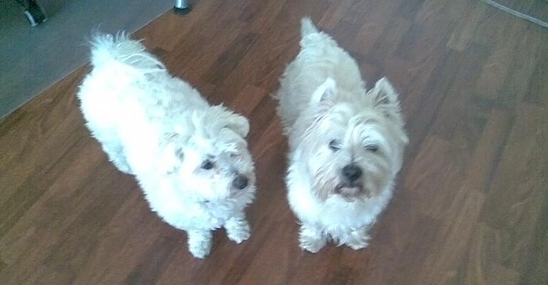 dogs_pair