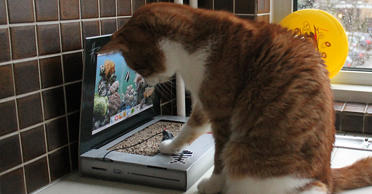 cat_laptop2