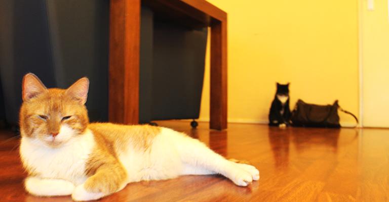 cats_twocats1