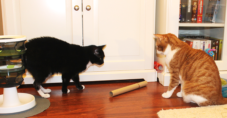 cats_twocats2
