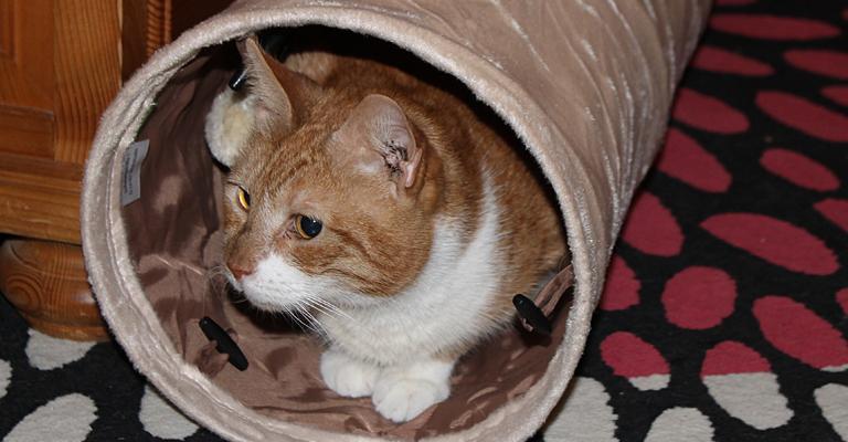 cats_etunnel1