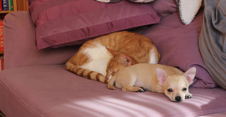het huis puppy proof maken tuxedo cat